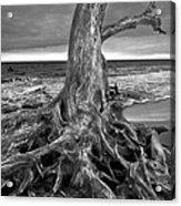 Driftwood On Jekyll Island Black And White Acrylic Print