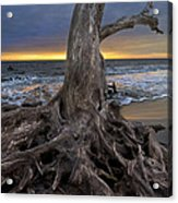 Driftwood On Jekyll Island Acrylic Print by Debra and Dave Vanderlaan