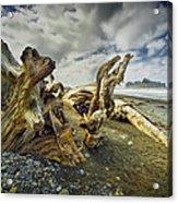 Driftwood On Rialto Beach Acrylic Print