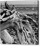 Driftwood On Rocky Beach Acrylic Print