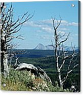 Gnarled Trees And Divide Mountain Acrylic Print
