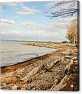 Driftwood On Shore Acrylic Print