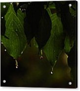 Dripping From The Green Acrylic Print