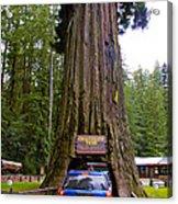 Drive Through Redwood Tree Acrylic Print