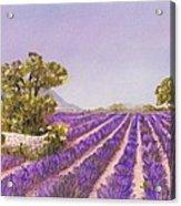 Drome Provence Acrylic Print