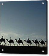 Dromedary Camels In Thar Desert Acrylic Print