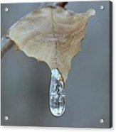 Drop of Ice Acrylic Print