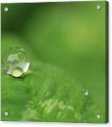 Drop On Green Acrylic Print