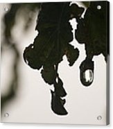 Droplet Acrylic Print
