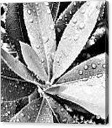 Droplets Acrylic Print