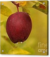 Droplets From A Red Apple   Acrylic Print