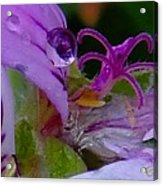 Droplets In Pink Acrylic Print