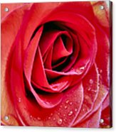 Droplets In Red Acrylic Print