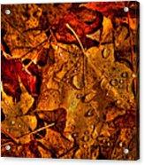 Droplets Of Autumn Acrylic Print