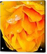 Droplets Of Joy  Acrylic Print