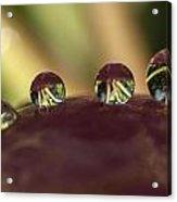 Droplets On An Apple Acrylic Print