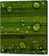 Droplets Acrylic Print