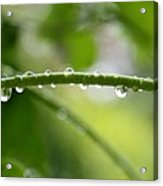 Drops In Line Acrylic Print