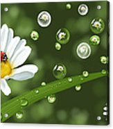 Drops Of Spring Acrylic Print