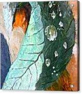 Drops On A Leaf Acrylic Print by Daniel Janda