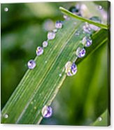 Drops On Grass Acrylic Print