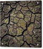 Drought Acrylic Print