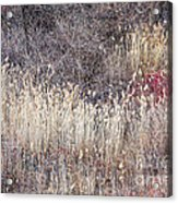 Dry Grasses And Bare Trees In Winter Forest Acrylic Print by Elena Elisseeva