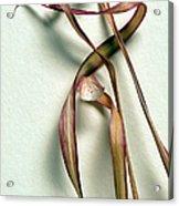 Dry Leaves Detail Long Acrylic Print