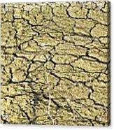 Dry Soil In Lake Bottom During Dryness Acrylic Print