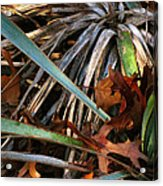Drycactuscomp 2009 Acrylic Print