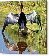 Drying Her Wings Acrylic Print