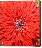 Dsc1516z-006 Acrylic Print