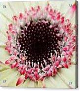 Dsc310d-004 Acrylic Print