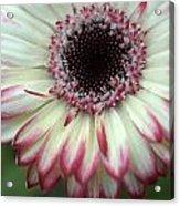 Dsc339-001 Acrylic Print