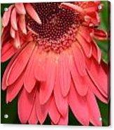 Dsc472-001 Acrylic Print