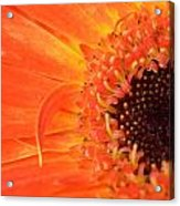 Dsc530-001 Acrylic Print