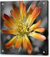 Dsc798d-001 Acrylic Print