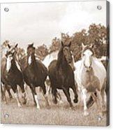 Duchess Sanctuary Big Herd Acrylic Print