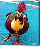 Duck 5515 7 A Acrylic Print