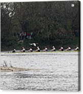 Duck Chasing The Boat Race Acrylic Print