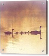Duck Family Acrylic Print