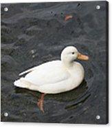 Duck Getting Feet Wet Acrylic Print