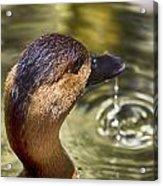 Duck Having Fun Acrylic Print