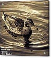 Duck In Grey Shades V A Acrylic Print