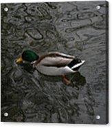 Duck On A River Acrylic Print