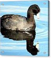 Duck Reflection Acrylic Print