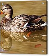 Duck Reflection Acrylic Print