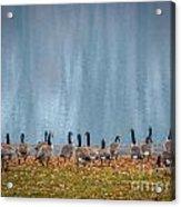 Duck Reflections Acrylic Print