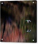 Duck Scape 3 Acrylic Print