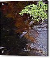 Duck Weed And Ice Acrylic Print